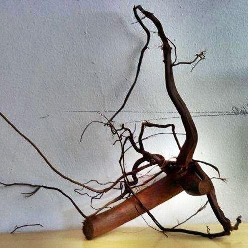 Moorkienwurzel Echtholz Wurzel Sort. 1, 25-30cm