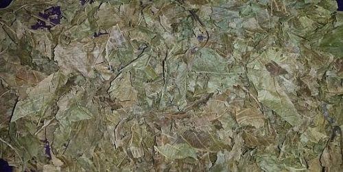 Wallnussblätter 2L/150 g Wirbellose, Garnelen, Krebse, Schnecken