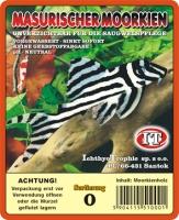 Moorkienholz Echtholz Wurzel Sort. 0 Gr. 20-25cm