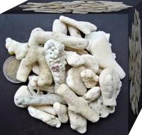 Korallensand / Korallenbruch 1kg 15-20mm