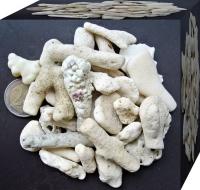 Korallensand / Korallenbruch 5kg 15-20mm